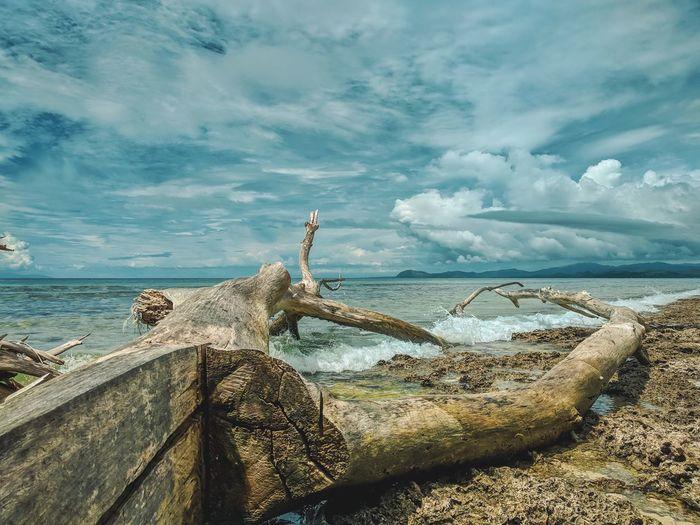 seascape Nature Natural Wood Water UnderSea Sea Beach Sand Iguana Bird Sky Horizon Over Water Cloud - Sky Wave