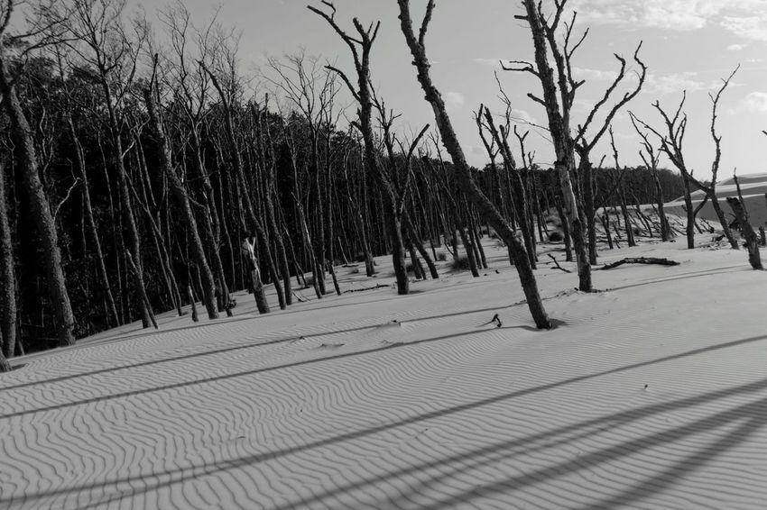 Słowiński Park Narodowy EyeEm Poland EyeEm Gallery EyeEm Best Shots EyeEm Best Edits EyeEm Best Shots - Landscape EyeEm Best Shots - Nature EyeEm Nature Lover EyeEm Best Shots - Black + White Creative Light And Shadow Deserts Around The World