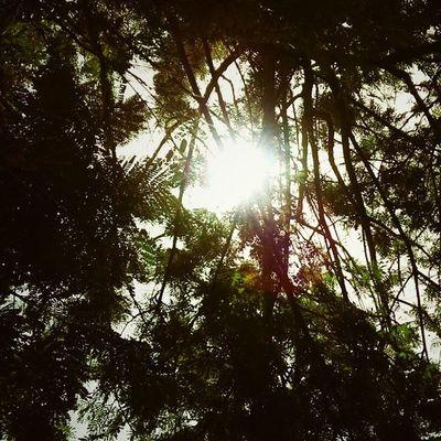 Sunlight High Trees Iith ODF Roaming Friends