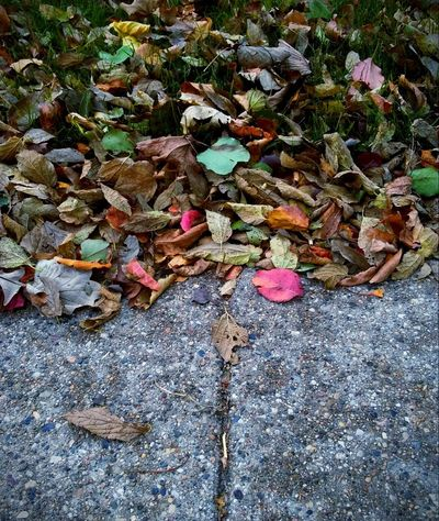 Along the sidewalk outside work! Day Leaf Abundance Outdoors High Angle View No People Nature Autumn Close-up Beauty In Nature Picturejunkie Check This Out Pretty♡ Workplace