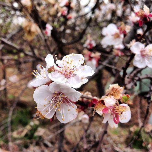 Flowers گل بهار بهاردرشهرمن Spring