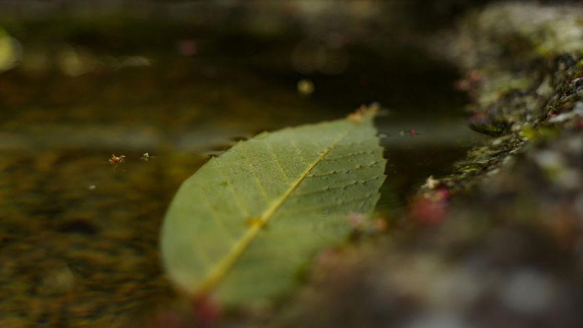 Leaf Selective Focus Day Water Nex5 Takumar 28mm F3.5 Buddhist Buddhist Temple Close-up