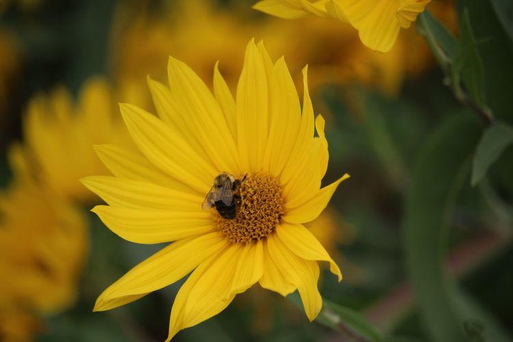 Flowers Nature Bee Yellow