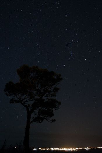 Spent two hours in the freezing cold to catch some of the Geminid Meteors on camera. There is one streaking across the middle of Orion, just above the tree and right a bit. Stars Shooting Stars Nightphotography EyeEm Best Shots - Long Exposure