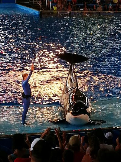 Glitch Seaworld Killer Whale Water Check This Out Reflections