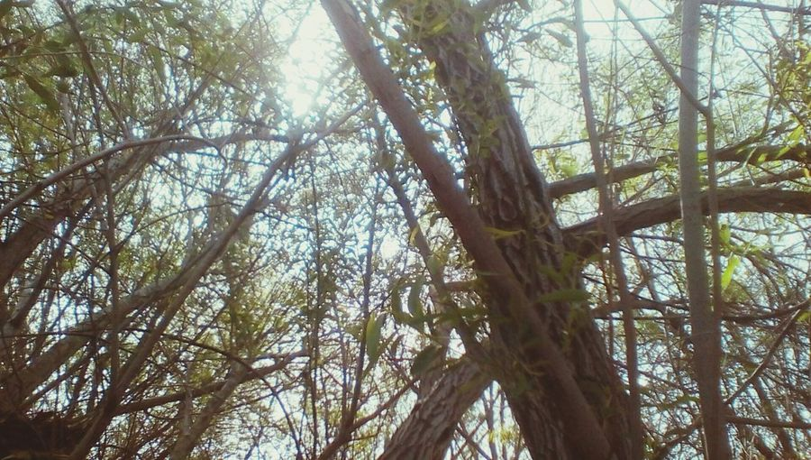 Beautiful Southern California Sky EyeEmNewHere Tree Moorpark