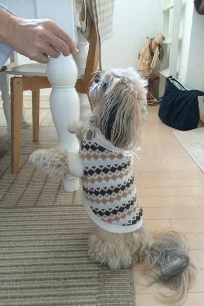 Lovely Cute♡ DogLove 犬 I Love My Dog ShiTzuForever🐶 Shitzu Shitzulove