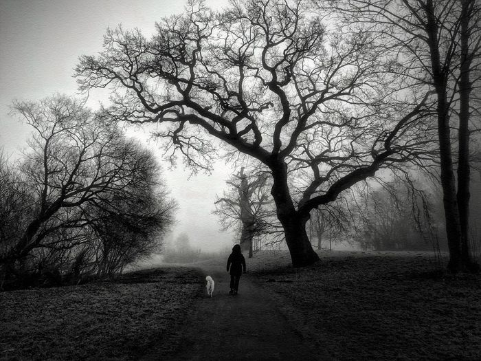 People Walking  People Watching Black & White Black And White Blackandwhite NEM Black&white Tree Area TreePorn Trees Silhouettes Treesilhouette Trees_collection Trees And Nature Trees And Sky Tree One Person Walking Fog Full Length Rear View People Winter Dog Landscape Beauty In Nature