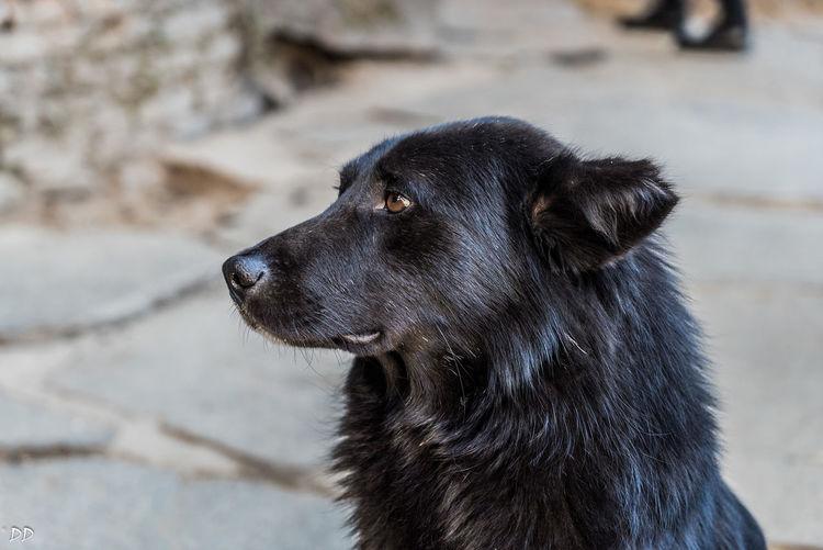 Dog Friendly Dog Hopefull Nature One Animal Waiting