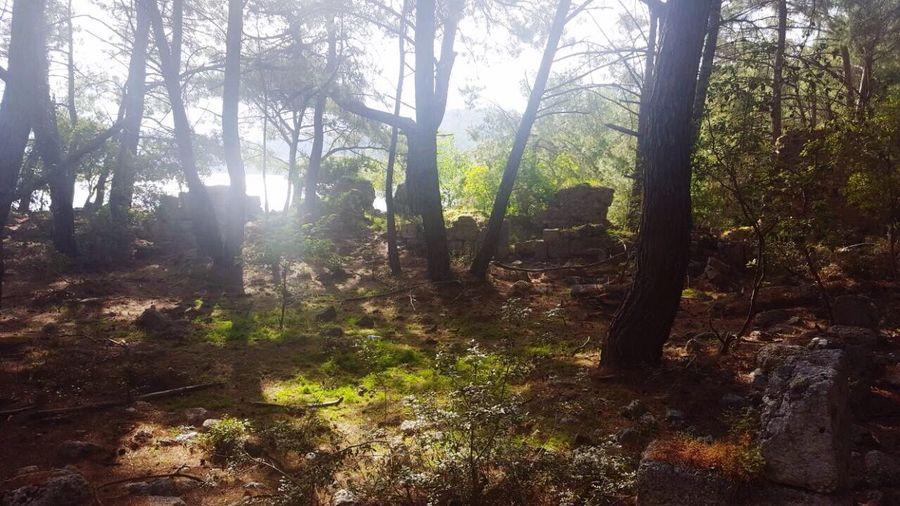 Forest Nature Tree Sunlight Sunbeam Scenics Tatilkafasi EyeEm Best Shots Tranquility Tranquil Scene Tree Trunk Beauty In Nature Landscape Travel Destinations No People Day Outdoors Fog Wilderness Area Tree Area Sky Manzara Dediğin  Beauty In Nature Gezelimgörelim