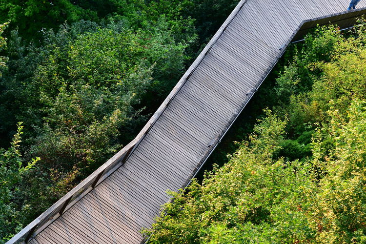 Tilt image of bridge amidst trees and plants in forest
