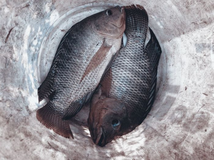 High angle view of fish sleeping on land