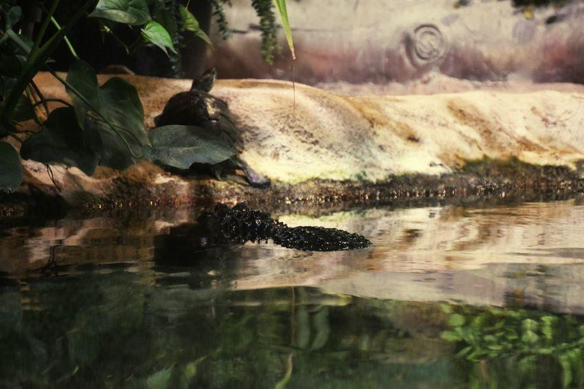 Holidays in Russia Aquarium Life of a Crocodile and Turtle 🐢