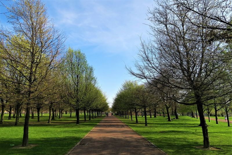Tree lined path 3dstructure Bare Tree Beauty In Nature Blue Blue Sky Blueskies Commonwealthgames Day Glasgow  Glasgowgreen Glasshouse McLennanArch Museum Nature Nature Nelsonmonument Outdoors Park Peoplespalace Scotland Sky Sunstar Tranquility Tree Trees