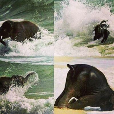 Elephant are so cute. :3