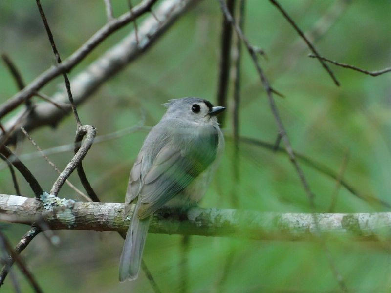One Animal Animal Wildlife Animals In The Wild Bird Animal Themes Branch Nature Perching Outdoors No People Day Titmouse Tree