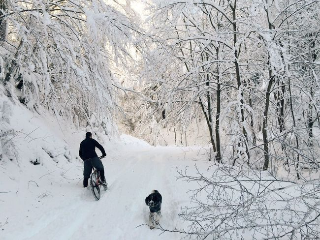 Cyclist slowly progressing through snow, Gorscica Trail, Nature Park Medvednica, Croatia, 2017. Gorscica Medvednica Croatia Trail Training Winter Snow Bicycle Cycling Workout Dog Leisure Activity Train Hard Cardio Strong