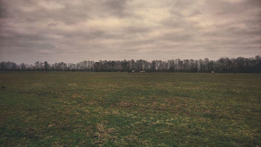 Fern, Louisiana WeAreJuxt.com Juxt WPPhoto Landscape The Environmentalist – 2014 EyeEm Awards