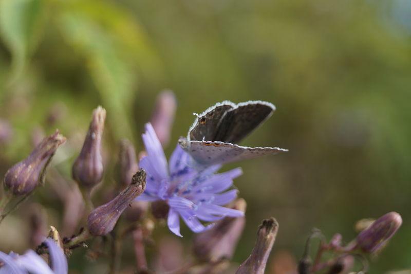 Осень... Хабаровск Khabarovsk бабочка Butterfly