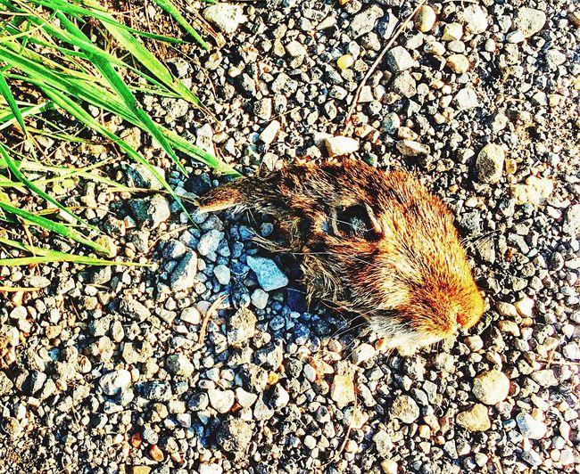 Someone/thing crueler than me... Stones Grass Death Rabbit Nature