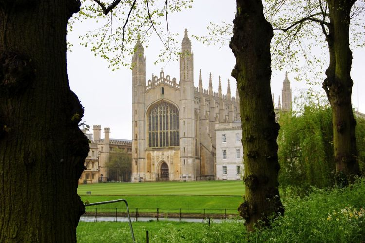 King's College College Cambridge Kingscollege Grass City Politics And Government Tree History Architecture Grass Built Structure