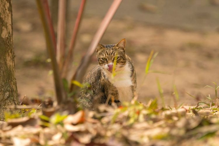Sigma 150-600c Sony A7RII Tsing Yi Hong Kong Domestic Cat Pets Animal Themes Feline One Animal Domestic Animals Mammal Cat Looking At Camera Selective Focus No People Plant Day Sitting Portrait Outdoors Nature
