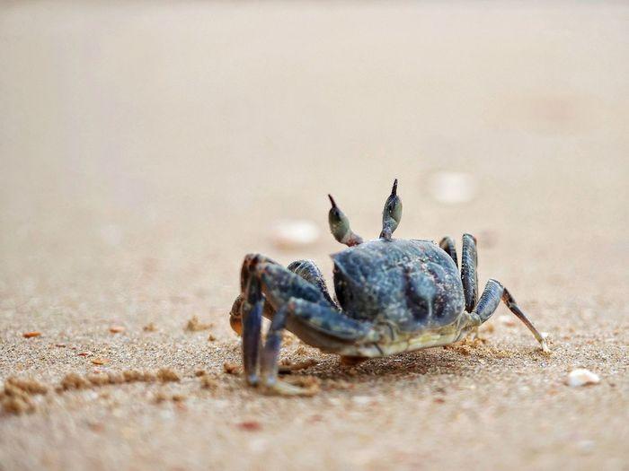 Close-up of crab on beach
