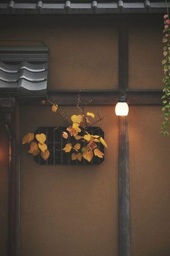 Streetphotography Snapshot Kyoto Machiya Light OpenEdit Kawara Green