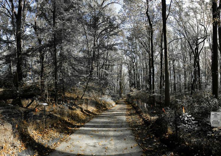 Tree Nature Tranquility Beauty In Nature Outdoors Leaves Trail Herbst Gehen Natur Weg Schön Blätter Autunno  Fogliame Natura Pista Camminare Природа листья осень след ходить