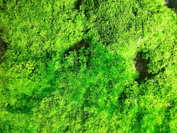 Textured  Green Background Background Moss Moss Plant Backgrounds Full Frame High Angle View Field Close-up Grass Green Color Green Young Plant Leaves Plant Life Leaf Vein Leaf Growing Greenery