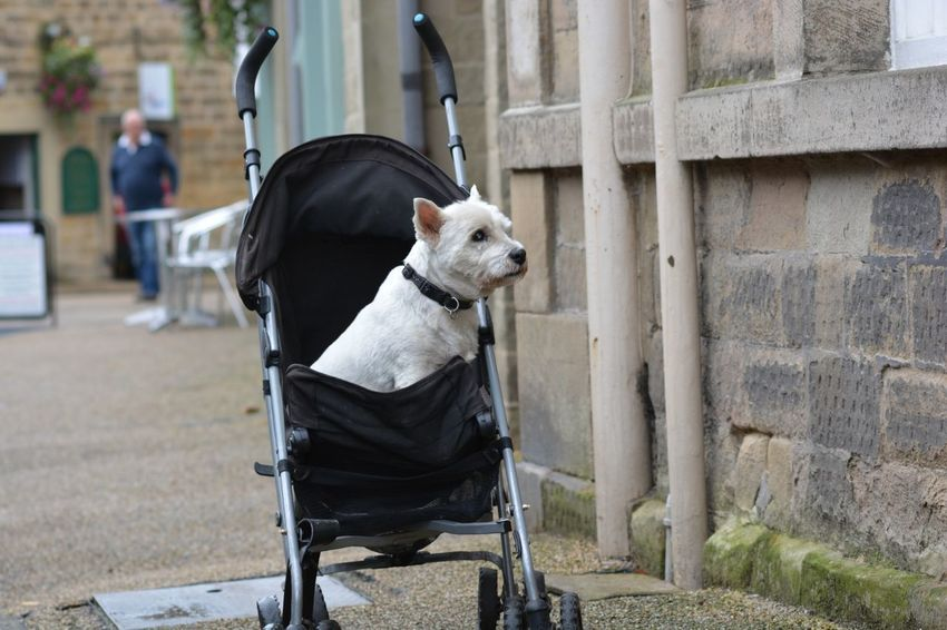 Dog Lover No People All My Own Work One Animal Street Bakewell Outdoors Day
