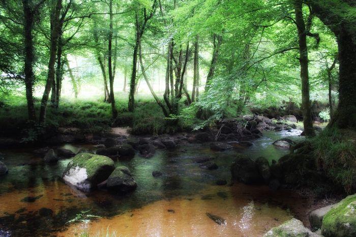 River Teign River WoodLand Rural Summer Check This Out Rural Devon