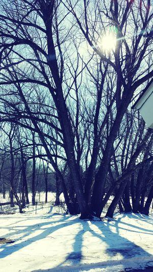 Wilderness Woods Forest Snow