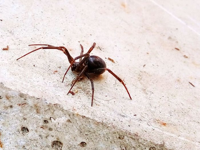 Animals In The Wild Insect Animal Themes One Animal Spider Animal Wildlife Day No People Close-up Outdoors Nature