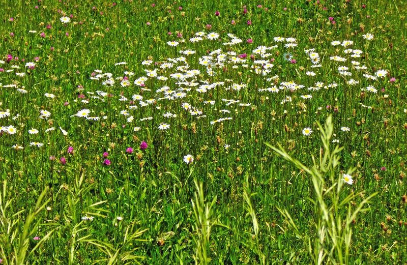 Wildflowers in