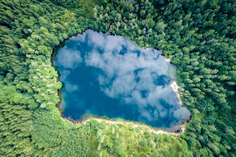 Aerial view of lake amidst trees in forest