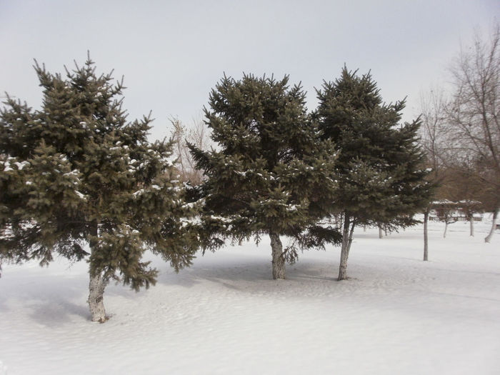 Beauty In Nature Christmas Christmas Tree Cold Temperature Day Landscape Nature No People Outdoors Snow Tree Winter