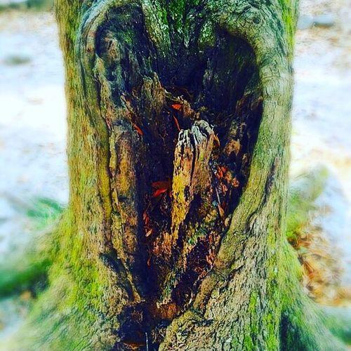 Charleston Tree has a Heart! Vikki Bradley O'Keefe Art