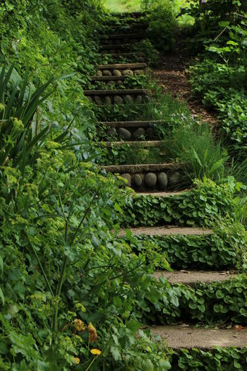 Beauty In Nature Color Palette Forest Green Green Color Growth Nature Non-urban Scene Outdoors Scenics Staircase Stairs Steps Steps And Staircases Stone Material Tranquil Scene WoodLand