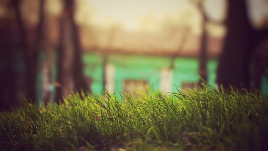 Nature Beauty In Nature Grass No People Focus On Foreground Green Color Tranquil Scene Freshness Lifestyles Still Life Real Life Plant Full Frame Grass Green Color EyeEm Selects