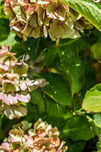 Spiderweb with