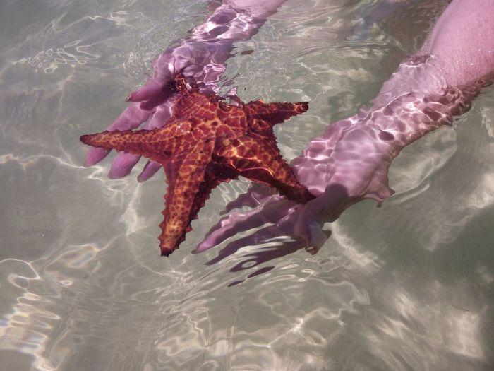 Starfish @ starfish point @ the Cayman Islands