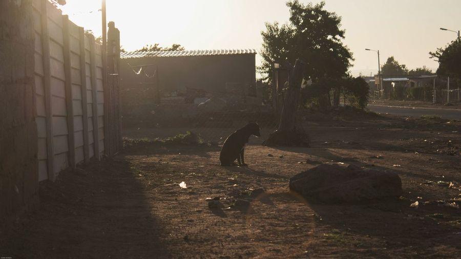 Outdoors No People Dogslife Dogs Of EyeEm Dogsleeping Alonetime Alone In The World Sunrise Sunrisephotography The Street Photographer - 2017 EyeEm Awards The Street Photographer - 2017 EyeEm Awards My Best Photo Springtime Decadence