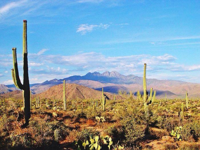 Desert Desiertos Kaktoes Naturaleza Life Made By Me This Is LIFE