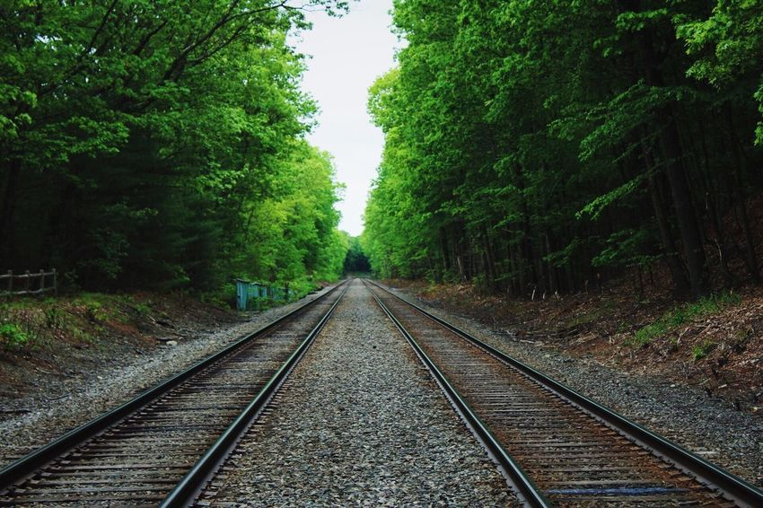 Road to Nowhere Trail Tracks Walden Trees Nature Leading Lines Trains Railroad Track The Way Forward Transportation Rail Transportation Tree Diminishing Perspective Nature