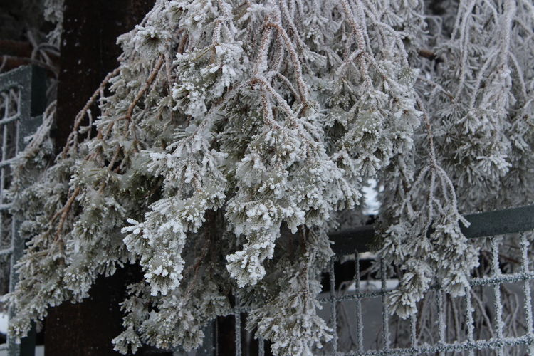 Frozen Ice Winter Beauty In Nature Cold Temperature Frozen Nature Growth Nature Outdoors Sky Station Snow Tree White