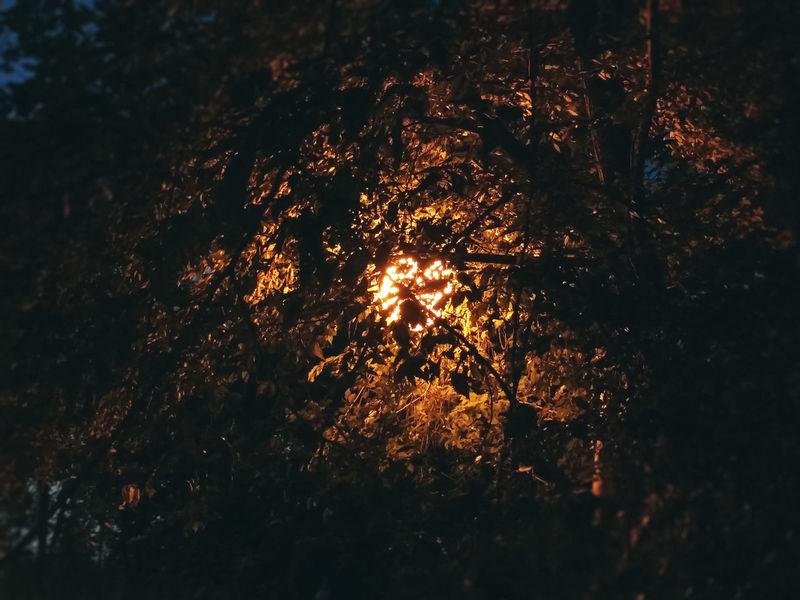 Light from the lantern through the leaves Dark Lantern Light Twilight Abstract Darkness And Light Evening Foliage Illuminated Leaves Night No People Park Tree Yellow