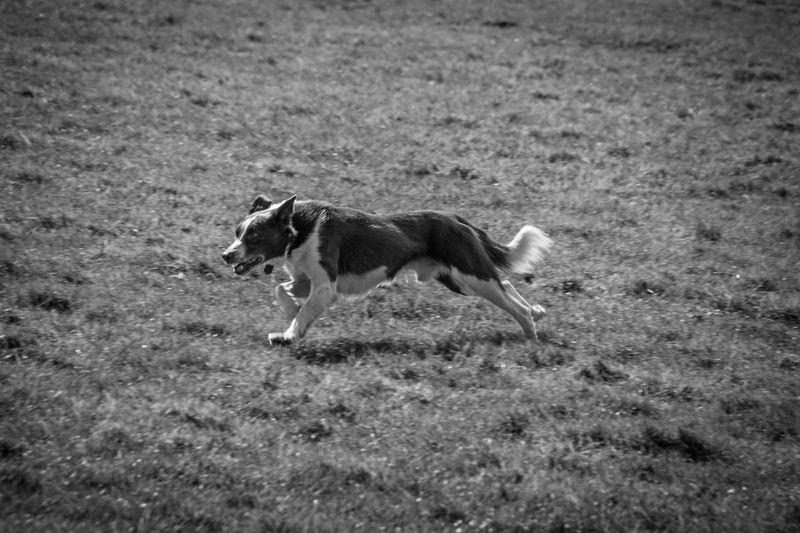 Dog walking in a field