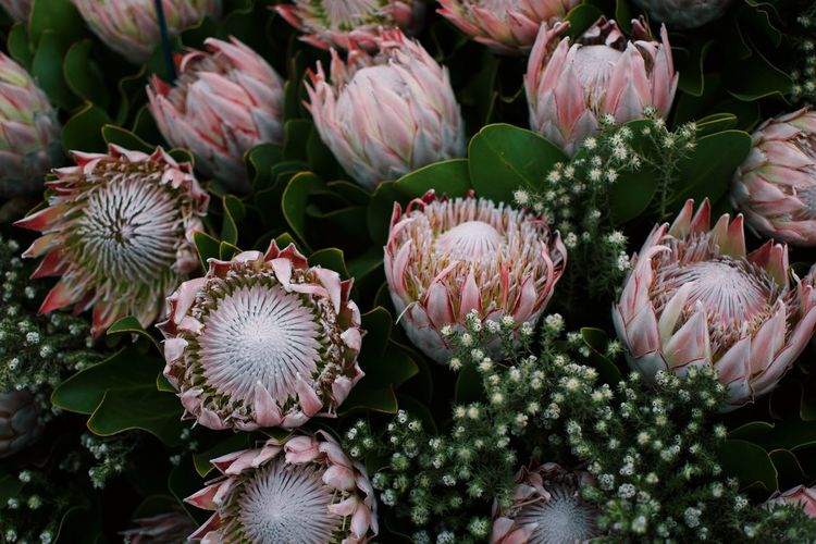 Plant Freshness Beauty In Nature Flower No People Growth Close-up Full Frame Abundance High Angle View Food And Drink Cactus Succulent Plant Green Color Nature Flowering Plant Pink Color Food Market Day