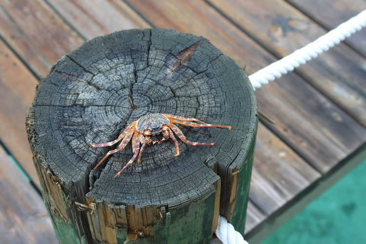 High angle view of dead crab on wooden post